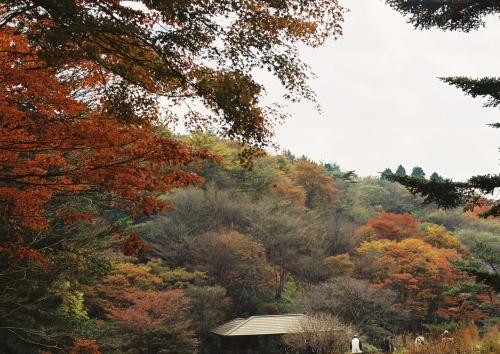 10月の紅葉